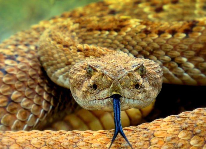 Pourquoi acheter une pince de serpent?